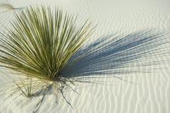 wydmowy zielonej rośliny piaska biel Fotografia Stock