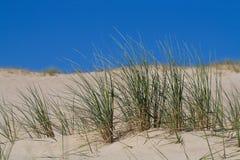 wydmy piasku plaży trawy Fotografia Royalty Free