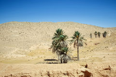 wydmy pustynne Sahara Obraz Royalty Free