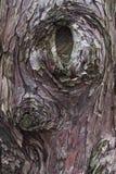 Wydrążenie od Starego drzewa fotografia royalty free