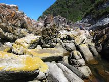 Wydrowy ślad przy Tsitsikamma parkiem narodowym, Południowa Afryka obraz stock