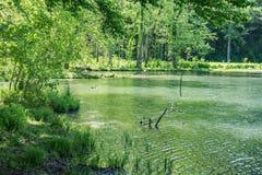 Wydrowy jezioro Zdjęcia Stock
