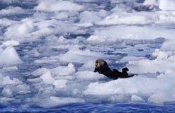 wydrowy morza Zdjęcie Stock