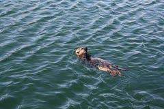wydrowy morze Zdjęcia Stock