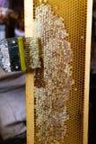 Wydruk honeycombs, narzędzie dla otwierać honeycombs zdjęcia stock