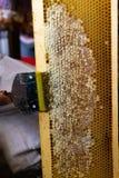 Wydruk honeycombs, narzędzie dla otwierać honeycombs zdjęcie stock