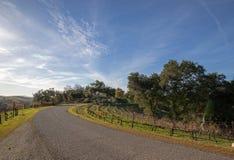 Wyginająca się droga przez Kalifornia grenache gronowych winniców w usa fotografia stock