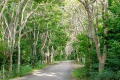 Wyginająca się droga w dzikim lesie wiecznozieloni drzewa na tropikalnej wyspie Zdjęcie Royalty Free