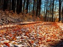 Wyginająca się kolorowa śnieżna lasowa droga w wczesnej zimy lasowym Świeżym prochowym śniegu obraz stock