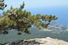 Wyginająca się samotna sosna na górze góry przeciw lesistemu miastu pod i wzgórzu, Pojęcie ekosystem konserwacja obraz royalty free