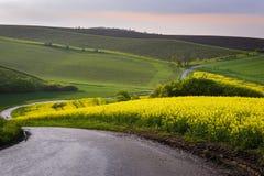 Wyginająca się wiejska droga na Południowym Morawskim regionie zdjęcia stock