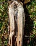 Wyginający się drewno Zdjęcia Stock