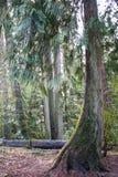 Wyginający się drzewo Obrazy Stock
