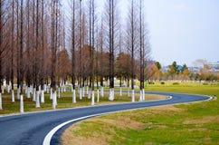 wyginający się jedlinowy drogowy drewno Zdjęcie Royalty Free