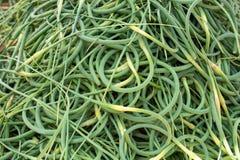 Wyginający się piękny strzały garliс Zielony wiosna czosnku strzał tło Rolnicy wprowadza? na rynek poj?cie zdjęcie royalty free