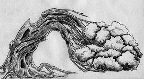 Wyginający się drzewny nakreślenie Obrazy Stock