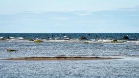 Wygodna plaża morze bałtyckie z skałami i zielonym vegetat obrazy royalty free