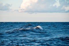 Wygodna plaża morze bałtyckie z wodą rozbija na r zdjęcia stock
