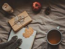 Wygodny dom w jesieni Notepad z łapami, prezentem i filiżanką gorąca herbata kotów, Odgórny widok Fotografia Stock