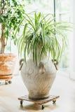 Wygodny domowy wewnętrzny projekt z dom roślinami przy okno zdjęcie stock