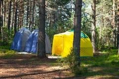 Wygodny plenerowy odtwarzanie Trzy małego technicznego campingowego namiotu stojaka w cieniu sosnowy las, pogoda są pogodni Ob?z  zdjęcie royalty free