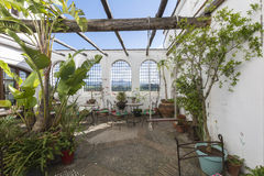 Wygodny podwórze z roślinami zdjęcie royalty free