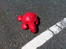 Wygrany tortoise zdjęcia royalty free