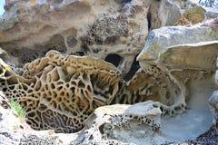 Wygryziona rockowa twarz pokazuje pięknego wzór wzdłuż linii brzegowej obrazy stock