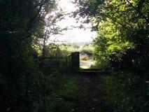 Wyjście od krzaków Zdjęcie Royalty Free