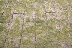 Wyjawione ziemi rolki z żółtą jesieni trawą, trawa są bardzo złe obraz stock