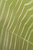 wykłada ranek pająka sieć Obrazy Royalty Free