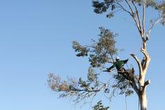 wykrawanie drzewny Fotografia Royalty Free