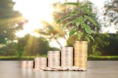 Wykres monet zapasu biznes i finanse Obraz Stock