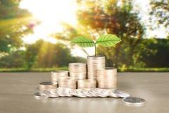 Wykres monet zapasu biznes i finanse Zdjęcia Stock