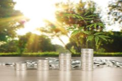 Wykres monet zapasu biznes i finanse Obrazy Stock