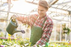 Wykwalifikowani młodego człowieka podlewania houseplants podczas gdy pracujący jako kwiaciarnia zdjęcia royalty free