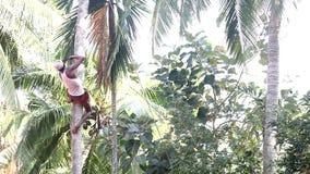 Wykwalifikowany mężczyzna na poparciu ciie drzewka palmowego i rzuty zestrzelają bagażnika zbiory