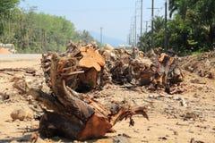 Wylesia dla budowy drogi Fotografia Stock
