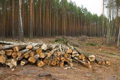 wylesianie Zdjęcia Royalty Free