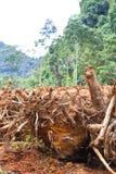 Wylesienie Obraz Stock