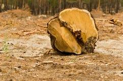 Wylesienie Obrazy Stock