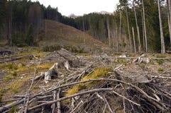 wylesienie Zdjęcia Royalty Free