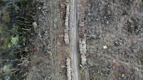 Wylesienie, zniszczony las po huraganu, widok z lotu ptaka zbiory wideo