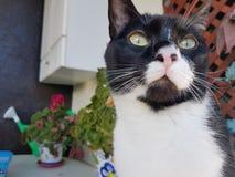 Wyllson the Cat Stock Photo