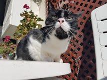 Wyllson katten som tycker om solen Arkivbild