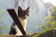 Wyllson le chat, quand il était Yong image stock
