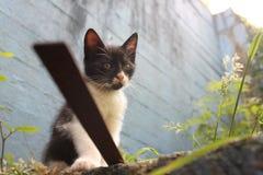 Wyllson o gato, quando era Yong Imagem de Stock