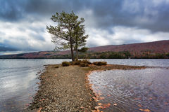 Wyman Lake in Maine late fall lone tree Royalty Free Stock Photography