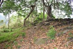 Wymarzeni gruntowi wzgórza Obrazy Stock