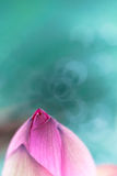 wymarzony lotos zdjęcie stock